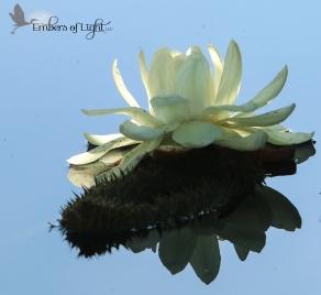 lotus CW