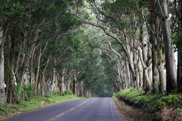 Treetunnel 5