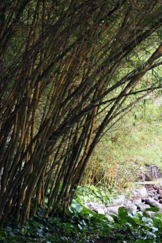 Allerton bamboo 8 CW