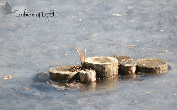 Wood stumps in ice