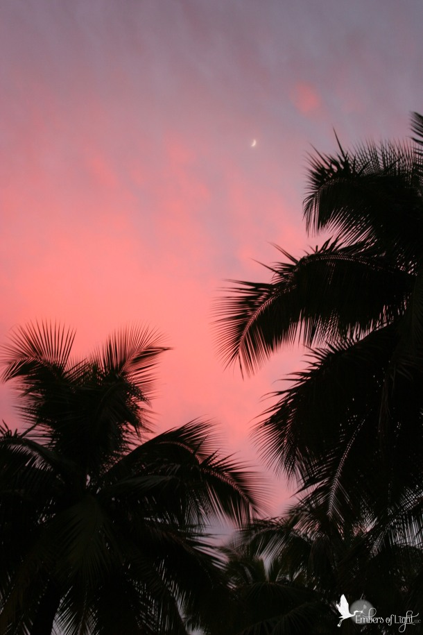 palm trees, sunset