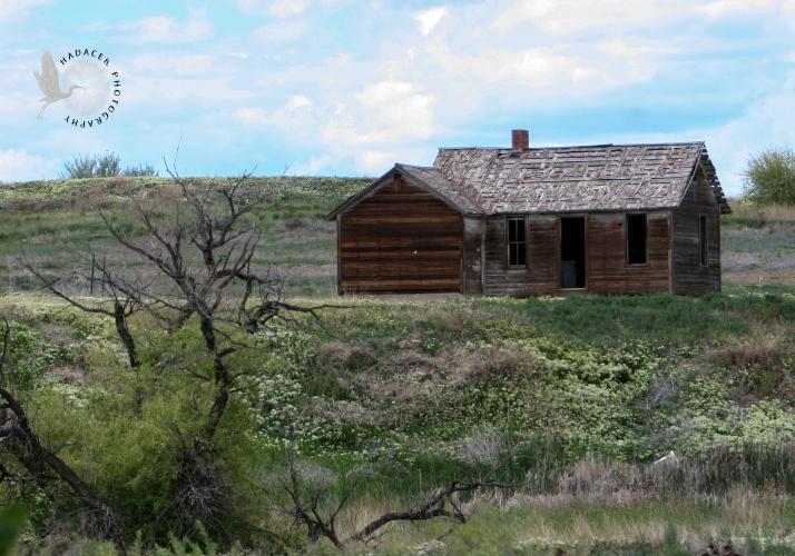Abandoned farmhouse w dead branch CW